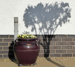 Pot and shadow outside a cottage at Heighley Court, Betley.