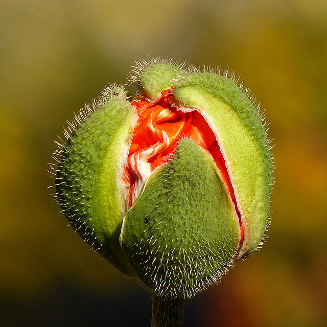 Ready to unfurl