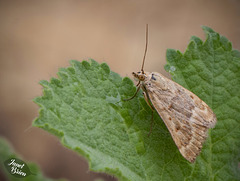 196/366: Moth on Leaf