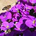 Fleißige kleine Biene 1