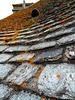 ... toiture traditionelle du Cotentin ...