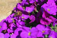 Fleißige kleine Biene 3  --  (PicinPic)