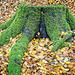Green Moss Monster