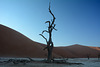 Namibia, The Early Morning at Deadvlei
