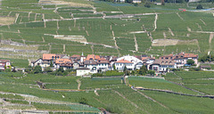 Epesses (Lavaux/Suisse)