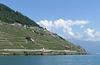le Dézaley   (Lavaux/Suisse)