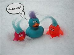 Ducks in jeopardy