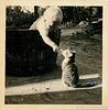 Katzenfreund mit ihr, die er nicht mochte