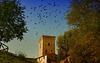 ... alle Vögel fliegen hoch ... !!!