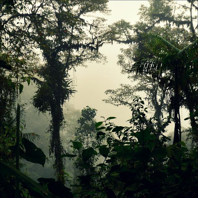 En el bosque nublado.