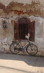 Poule sur vélo peint / Hen on painted bicycle