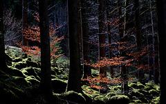 Nordscharzwald bei Calmbach