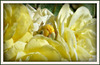 L'odeur de rose, faible, grâce au vent léger d'été qui passe,se mêle aux parfums qu'elle a mis.