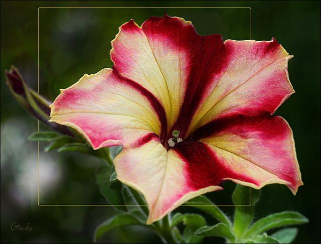 Die Blume ist das Lächeln der Pflanze. ~ Peter Hille