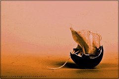 The 50 Images Project - tea bag - 9/50 -filling
