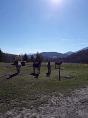 Sur le plateau de Sault en Pyrénées audoises