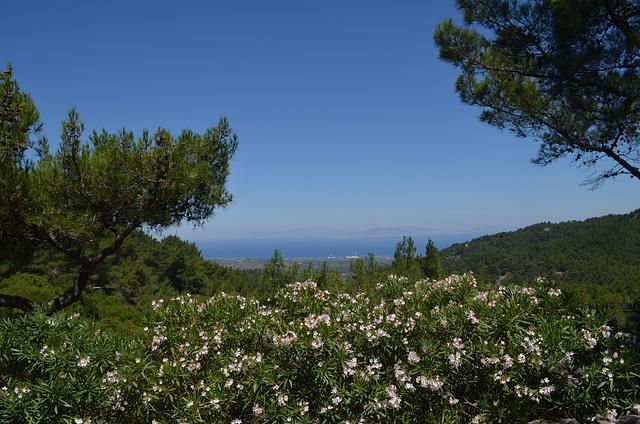 Rhodes, Flowering Oleander