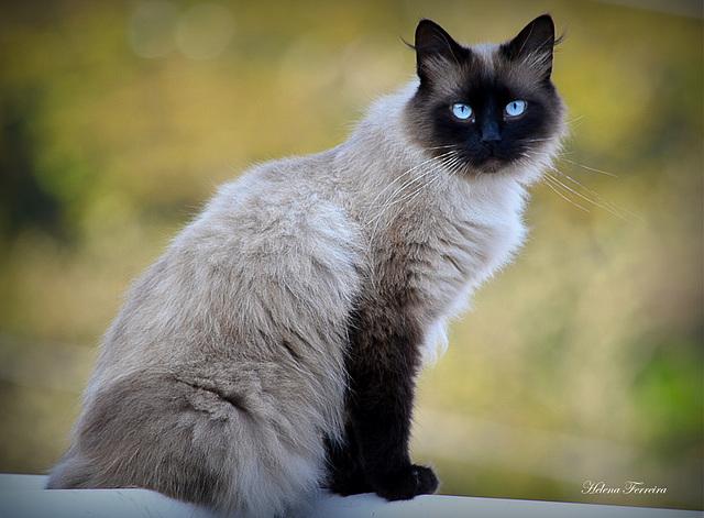 My sweet cat Nino.