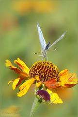 Flower Waltz...