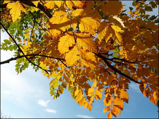Bonjour l'automne ! [ON EXPLORE]