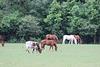 Animal pasture in Burke County, near Waynesboro, Georgia    USA
