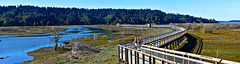 Nisqually National Wildlife Refuge Trail ... (PiP)