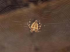 Heart-shaped Web