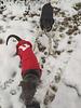 Première neige pour Rover le rouge !
