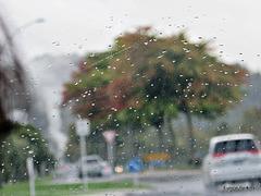 Rain in Rotorua