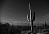 Saguaro National Monument (8A)