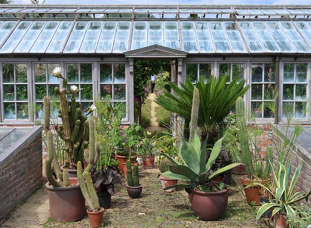 Cacti, agaves, cycad