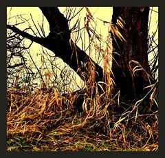 Left over grass