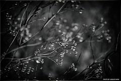 Tears of the rain...