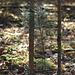 HFF aus dem Wald