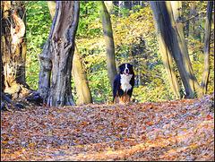 a Bloemlag  Dog...,,,,