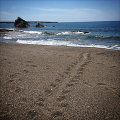 Turtle tracks. Great emotion.