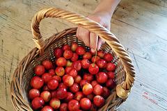 le ciliegie dell'orto della nonna