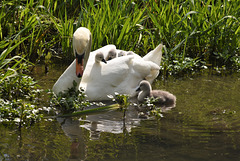 Mother and babies!!