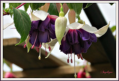 Le vrai bonheur est celui que l'on cultive journée par journée comme les fleurs.