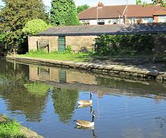 Ashton canal, Droylesden, Manchester.