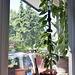 DSC1467 meine neue Fensterbank