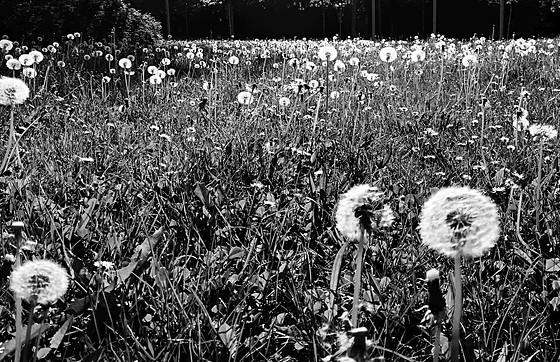 SSC: Nature  in black and white