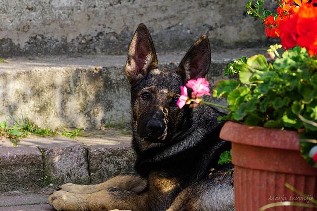 Max 4 months
