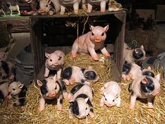 Kleine Schweinereien