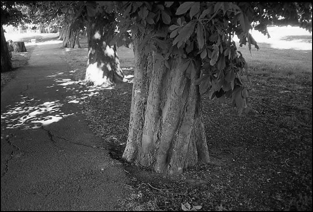 Chestnuts, Ruskin Park.