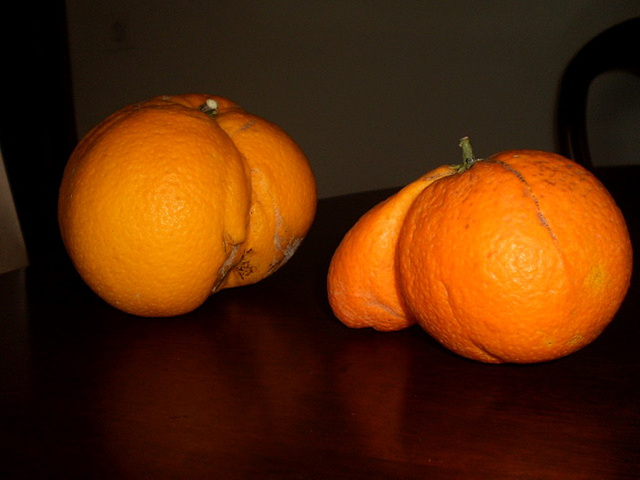 Oranges from Algarve.