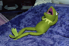 Kermit In Repose
