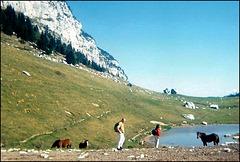 Des chevaux dans les alpages [ON EXPLORE]