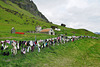 Bra Fence in Iceland - HFF