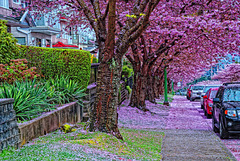 North Hythe Street Burnaby
